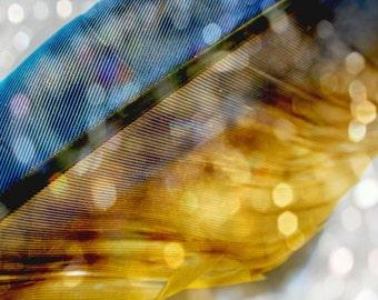FEATHERED DREAMS series Original Color Close Up Nature Art Photograph