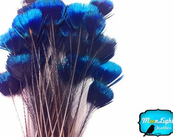 Corona Peacock Feathers, 10 Pieces - BLUE Iridescent Peacock Crown Loose Feather : 2222