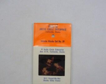 Vintage Interior Alaska Slides Arctic Circle Enterprises, vintage slides, vintage souvenir slides