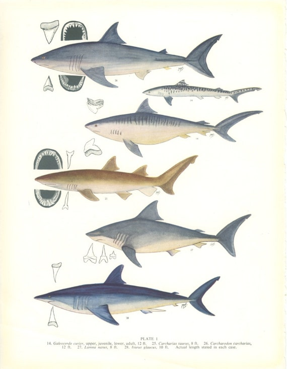 essay on ichthyology 29092016 the world's oceans, lakes, and rivers harbor tens of thousands of fish species here are 10 essential facts about fish that everyone should know.