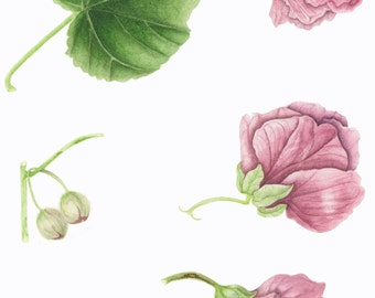 Flowering Maple/ BOTANICAL ILLUSTRATION/Archival Giclee Print/Natural Science Tradition/Pink,Green