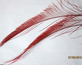 """2 Red Peacock Feather Swords  - stems 10"""" long"""