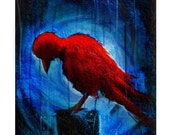 Limited Edition Oracle Card - Red Crow