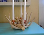 4 Heavy  Antler Candle Holder ,white tail