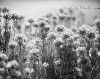 Hush : desert flower photo nature photography black and white monochrome winter spring home decor 8x12 12x18 16x24 20x30 24x36