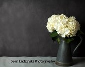 11x14 Hydrangea Still Life - Home Decor - White Flowers - Shabby Chic - For Her - Home Decor - Botanical Print - Gray, White, Vintage