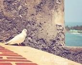 beach house decor blue green bird art -  Pretty Pigeon - Fine Art Photography Print