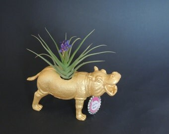 Love You More gold hippo planter with air plant.