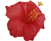 6 PCS. 4.50 inches Red Hawaiian Hibiscus flower Craft and Decoration
