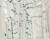 "Birchwood Trees, Aspen, Travel Photography, Nature Photo, Landscape, Affordable Home Decor, Fine Art Photography, ""Aspen"""