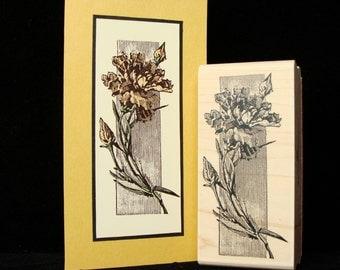 carnation stem  (smaller)