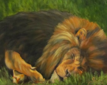 "Lion wildlife animal cat  original art oil painting realism on 11"" x 14"" canvas by Sandra Cutrer Fine Art"
