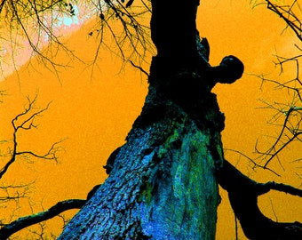 Surreal Old Tree Fine Art Photography
