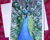 Peacock -  Card - Blank Inside