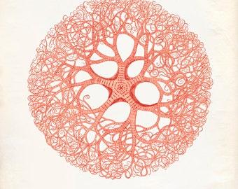 Vintage Sea Coral Print 8x10 P266
