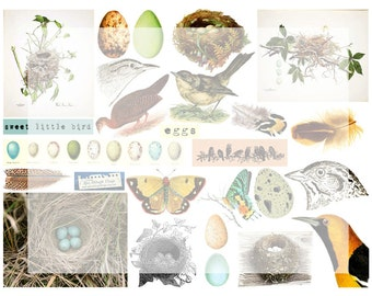 Digital Collage Sheet No 15 Birds Eggs Nest Feathers