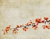 Cherry Blossoms Spring Botanical Flowers Tree Nature - 11x14 art photography print by Dawn Smith