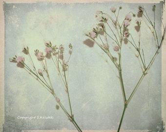 Tiny Pink Flower Photograph Shabby Chic Romantic Baby Breath Still Life Lovely Pale blue gray pink wall decor 8x10