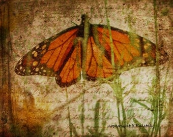 Butterfly Photograph Monarch Rust Orange Green Photography Vintage Butterfly Picture Nature Wings 8x10 photograph