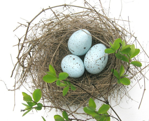Robin eggs, bird eggs, spring decor
