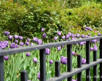 Central Park Photography, New York Photography, Large Wall Art, Spring, Flowers, Purple Tulips, Nature, Green, Manhattan