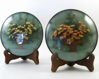 1930s Dried Botanical Wall Decor Round Convex Glass Set of Two