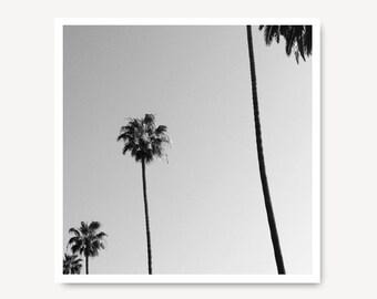 LA Travel Photo, Los Angeles, Palm trees, Black and White, Landscape Photography, Tree print, Black and White Photo,  Art Print, LA