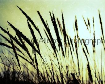 beach grass photography print