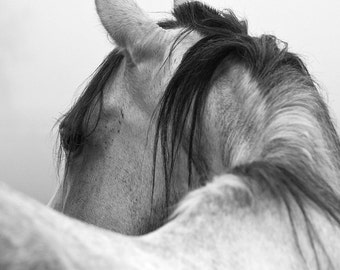 SALE Horse Photography Black and White Horse Photograph