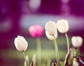 "Flower Photography - purple wall art green pink white tulip floral nature print dark photo botanical, 11x14, 8x10 Photograph, ""Still I Rise"""