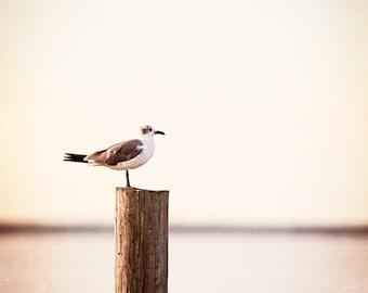 "Seagull Photography - bird beach photograph cream beige neutral pale light brown coastal print seashore, 10x10, 8x8 Photo, ""Life on the Bay"