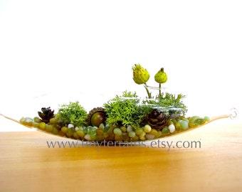 Lichen Terrarium - Pretty Little Lichen Vessel Terrarium