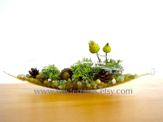 Mothers Day Gift Lichen Terrarium - Pretty Little Lichen Vessel Terrarium