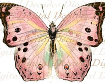 Pink Butterfly Insect - Vintage Art Illustration - Digital Image - Instant Download