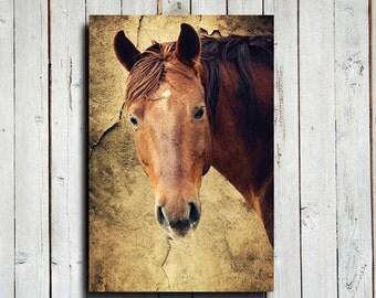"Friendly Face - 16x24"" canvas - Horse decor - Rustic decor - Western decor - Horse art - Horse photography - Horse canvas"