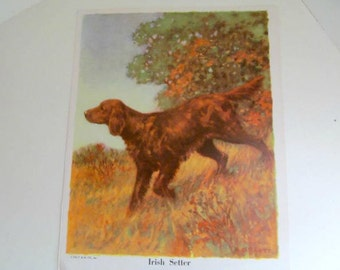 Vintage Book Illustration Print Irish Setter Dog, 1930s P & M Company Art Print