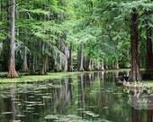 Cypress Trees Photo, Sumter South Carolina, Nature Photography, Spanish Moss Tree Photography, Swan Lake Photograph, 5x7 Fine Art Print