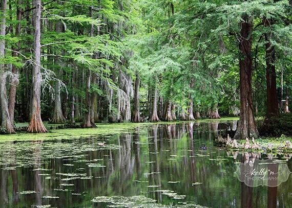 Cypress Trees Photo, Sumter South Carolina, SC Nature Photography, Cypress in Lake Print, Water Reflection, Green Art, Tree Photography