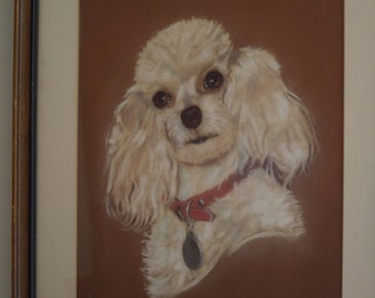 Poodle Picture Pastel Drawing Cream White Dog