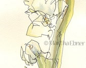 Narcissus Flower Stalk Watercolor Line Drawing