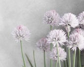 Lavender Flowers and Green Chives on Soft Gray -  Fine Art Photo