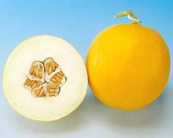 25 Canary Melon Seeds-1029