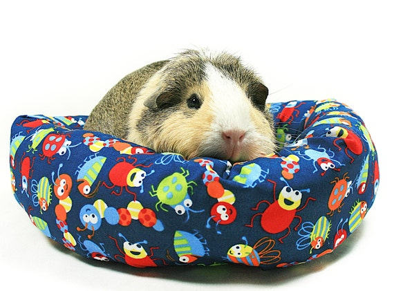 Beetles and Bugs Guinea Pig Cuddle Roll