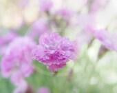 DIGITAL DOWNLOAD - Flower Photography Light Pink Rose Tiny Rubies Early Morning Rain Drops Bokeh Feminine Romantic Soft Muted Tones