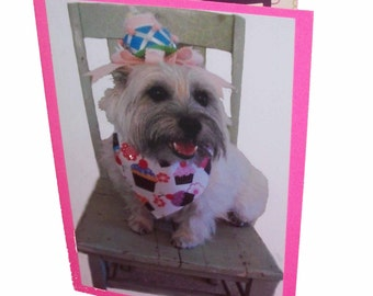 Cairn Terrier Celebrate Card, Cairn Terrier Birthday Card, Dog Celebration Card, Blank Photo Card