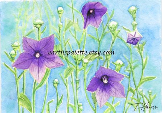 Purple balloon flower painting, 5x7, original watercolor, floral nature home decor earthspalette