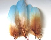 Goose Shoulder Feathers -  Dyed Light Turquoise and Light Brown