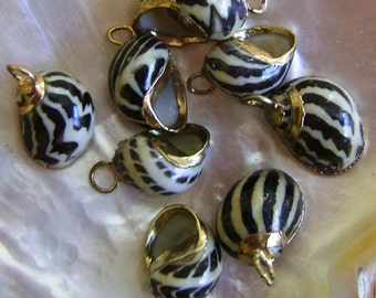 Nerita Sea Shell Jewelry Components Gold-Plated 8 pcs.