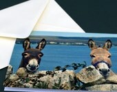 A6 Photo Greeting Card of 2 donkeys - BLANK