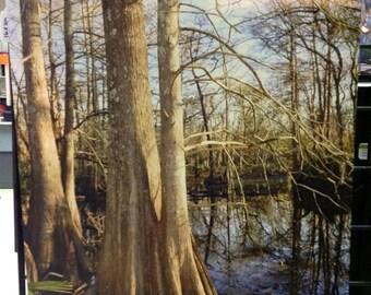 Texas Cypress
